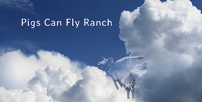 Pigs Can Fly Ranch site screenshot